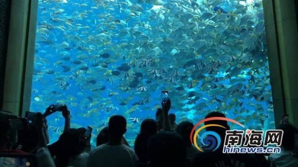 """""""遇见海棠""""全国旅游达人走进亚特兰蒂斯 体验惊险刺激水世界"""