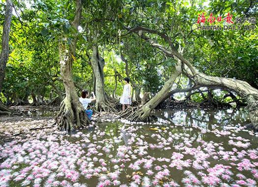 端午小长假:儋州中和镇七里村玉蕊花开引客来