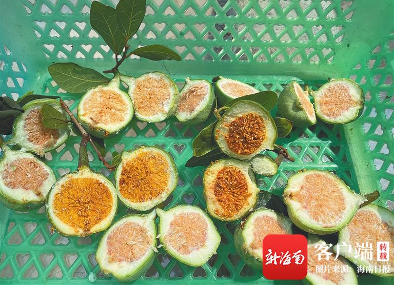 万博亚洲入口周刊 | 民间传统小吃薜荔凉粉:来自树上的果冻