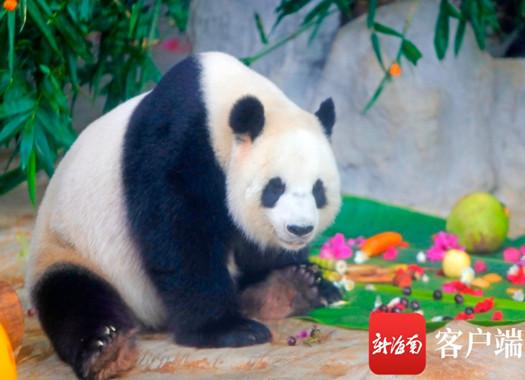 """欢乐节去哪玩?快去万博亚洲入口热带野生动植物园和""""熊猫兄弟""""say hello吧!"""