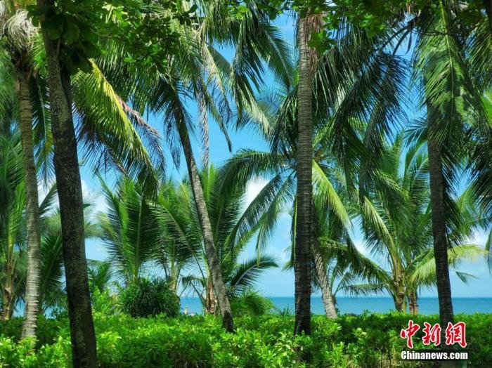 资料图:天涯区三亚湾一带风光旖旎。 王晓斌 摄